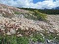 Fuzzy Slope - panoramio.jpg