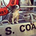 GSXR, Clevleand Harbor's mascot 141013-G-ZZ999-001.jpg