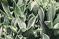 Garden of Succulents (Unsplash).jpg