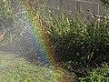 Garden rainbow sprinkler.jpg