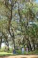 Garden view - Bok Tower Gardens - DSC02271.jpg