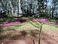 Garden with flowers like butterflies.jpg