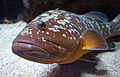Genoa - aquarium 3.jpg