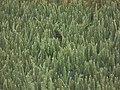 Getreidefeld als Nahrungsquelle für Vögel.JPG