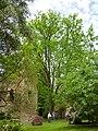 Giardino di Ninfa 124.jpg