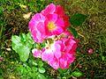 Giardino di Ninfa 2.jpg