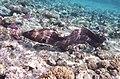 Gigantische Muräne im Roten Meer..DSCF3620ВЕ.jpg
