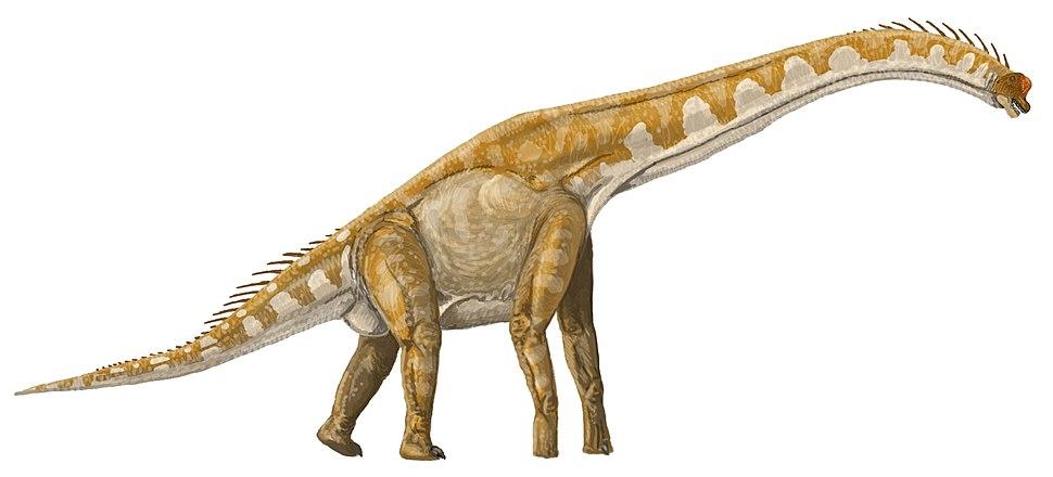 Giraffatitan DB