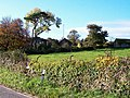 Glan Lleiniog Farm from the Penmon road - geograph.org.uk - 1539888.jpg