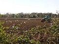 Godwinscroft, ploughing the fields - geograph.org.uk - 1248867.jpg