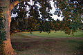 Golf green (1444274542).jpg