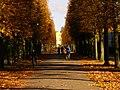 Grünes Gitter und herbstliche Allee, Schloß Sanssouci.jpg