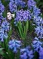 Gradina Botanica (8703530904).jpg