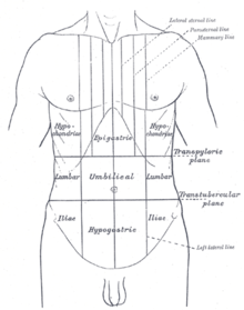 hypogastrium - wiktionary diagram of inside of a 747 diagram of epigastrium