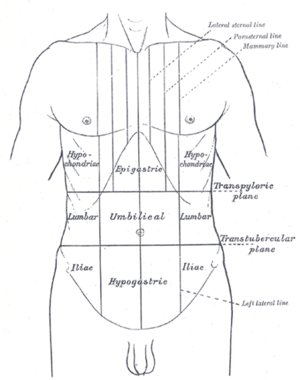 Traube's space - Surface lines of the front of the thorax and abdomen. (Traube's space not labeled, but is in the left hypochondriac region.)