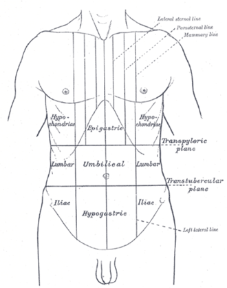 Intertubercular plane - Surface lines of the front of the thorax and abdomen. (Transtubercular is bottom horizontal line.)