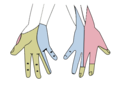 Gray812and814 hand.png