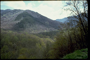 Great Smoky Mountains National Park GRSM8831.jpg
