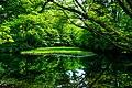 Green Pond (155468923).jpeg