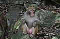 Guilin - opice v parku sedmi hvězd - panoramio.jpg