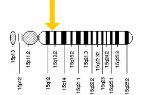 HERC2 - The HERC2 gene is located on the long (q) arm of chromosome 15 at position 13.