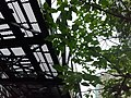 HK 中環 Central 半山區 Mid-levels 鑬車徑 Tramway Path near Kennedy Road St Joseph's red brick building school April 2020 SS2 08.jpg