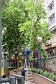 HK SYP 西營盤街道 Sai Ying Pun 居仁里 Kui Yan Lane 第三街遊樂場 Third Street Playground trees workers July 2017 IX1 02.jpg