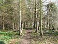 Hadrian's Wall Path in woodland west of Planetrees - geograph.org.uk - 1246660.jpg