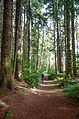 Haida Gwaii (Queen Charlotte Islands) - Graham Island - nice trails - (21373404109).jpg