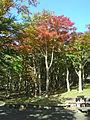 Hakone Ashinoko lake dsc05430.jpg