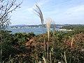 Hamajimacho Hamajima, Shima, Mie Prefecture 517-0404, Japan - panoramio (4).jpg