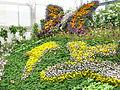 Hampyeong butterfly festival 160.JPG