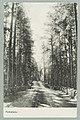 Harjutie, Harjutien korkea osa, Tarkemmin määrittelemätön paikka, circa 1910 PK0122.jpg