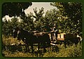 Hauling crates of peaches from the orchard to the shipping shed, Delta County, Colo. LCCN2017877604.jpg