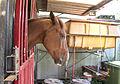 Head of a horse.jpg