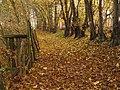 Herbst Pfad - panoramio.jpg