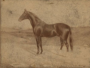 Himyar (horse) - Portrait of Himyar by Harry Lyman (1888)