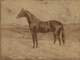 Himyar (horse) - Portrait of Himyar by Harry Lyman (1888)