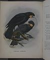 History of the birds of NZ 1st ed p062-2.jpg