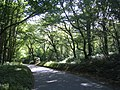 Hitch Wood - geograph.org.uk - 561463.jpg