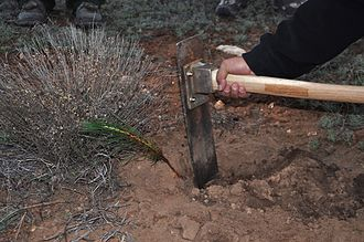 Hoe (tool) - Hoedad (tree-planting tool) Kaibab National Forest, Arizona, USA