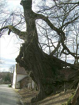 Die Hohle Linde in Obermarbach, Ostansicht