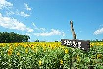 Hokuryu town Sunflower field.JPG