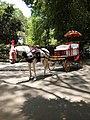 Horse Cart Empress Garden.jpg