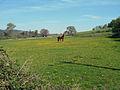 Horse in a field (3470743161).jpg