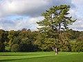 Hughenden Park, High Wycombe - geograph.org.uk - 1021828.jpg