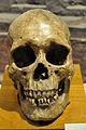 Human Skull - 2600-1700 BCE - Harappa - Indian Museum - Kolkata 2014-04-04 4488.JPG