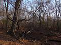 Humberwoods (23088973211).jpg