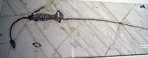 Choristodera - Hyphalosaurus