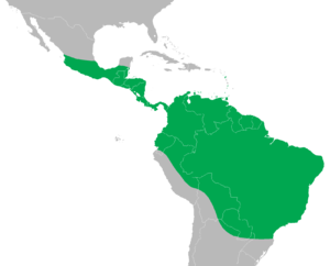 Green iguana (Iguana iguana) distribution map